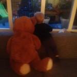 """""""Hug a Bear day"""", Een dag om stil bij te staan, incl de vergeten kinderen"""