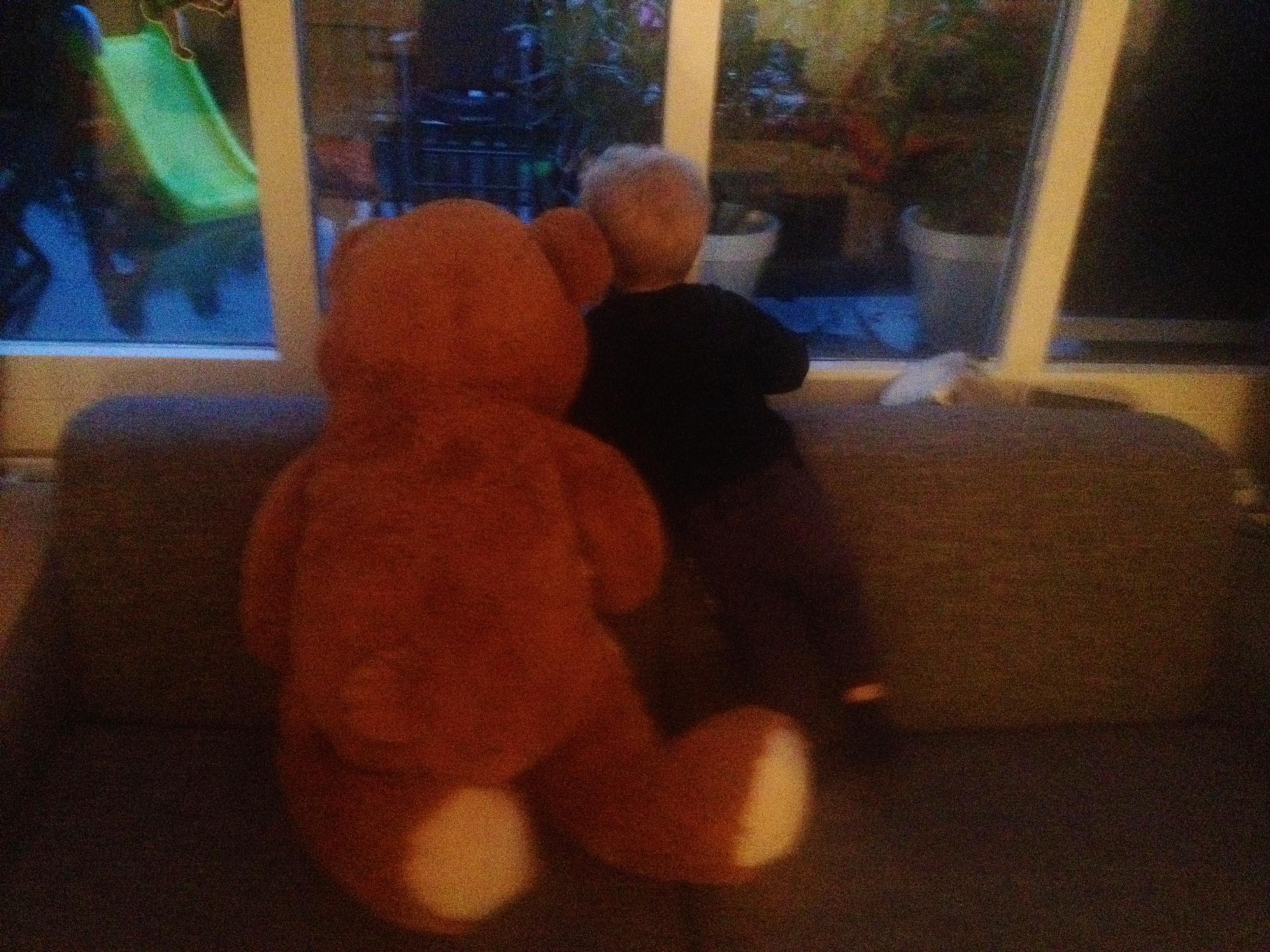 Hug a Bear Day