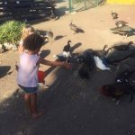 moederschap in curaçao eendjes