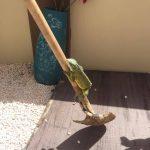 moederschap in curaçao wild life