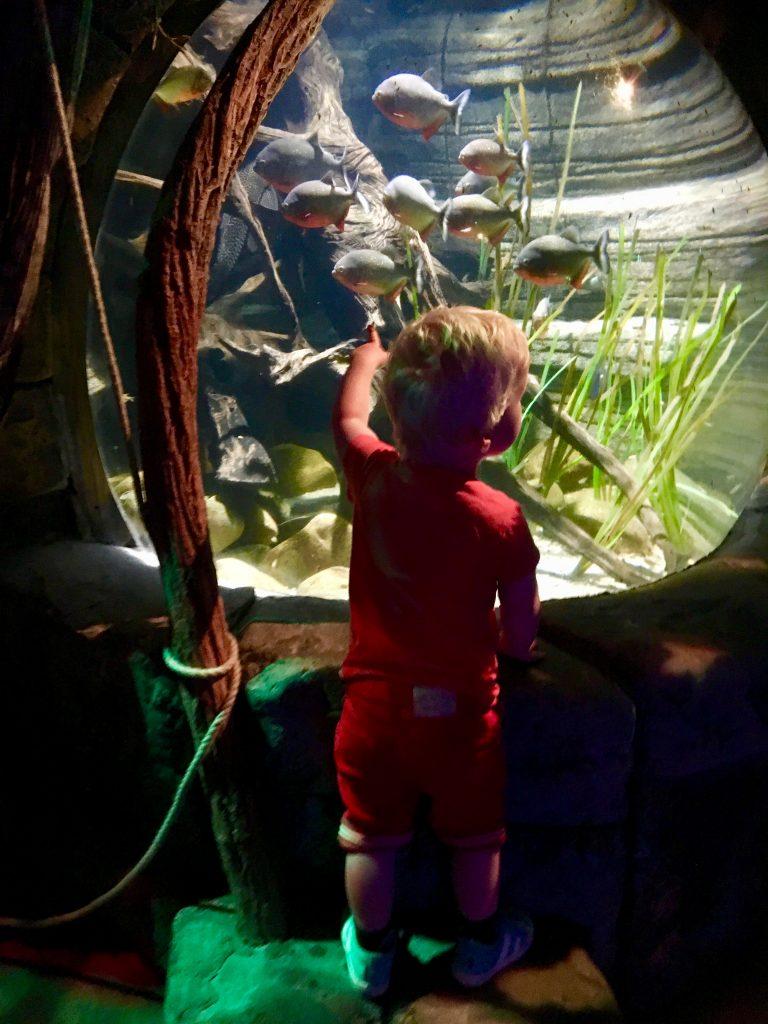 SEA LIFE Oberhausen, aquarium