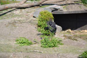 Safaripark beeksebergen