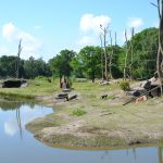 Safaripark Beekse Bergen opent groot gorilla-eiland en nieuw entreeplein. Tip! Neem mobieltjes mee