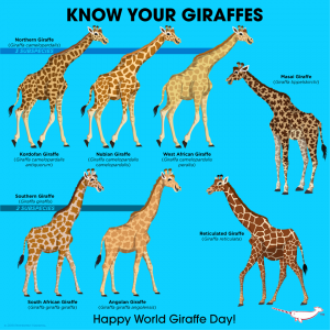 Internationale Dag van de Giraffe