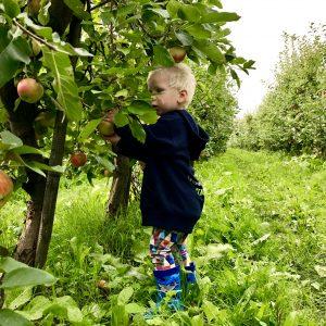 appelplukdagen landgoed de olmenhorst