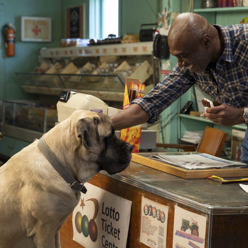 """Hondenliefhebbers opgelet! """"A Dogs Journey"""" wil je zien!"""