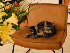 fauteuil, stoel, huisdierensterren, rebelse honden, trouwe viervoeter, honden, katten, boek