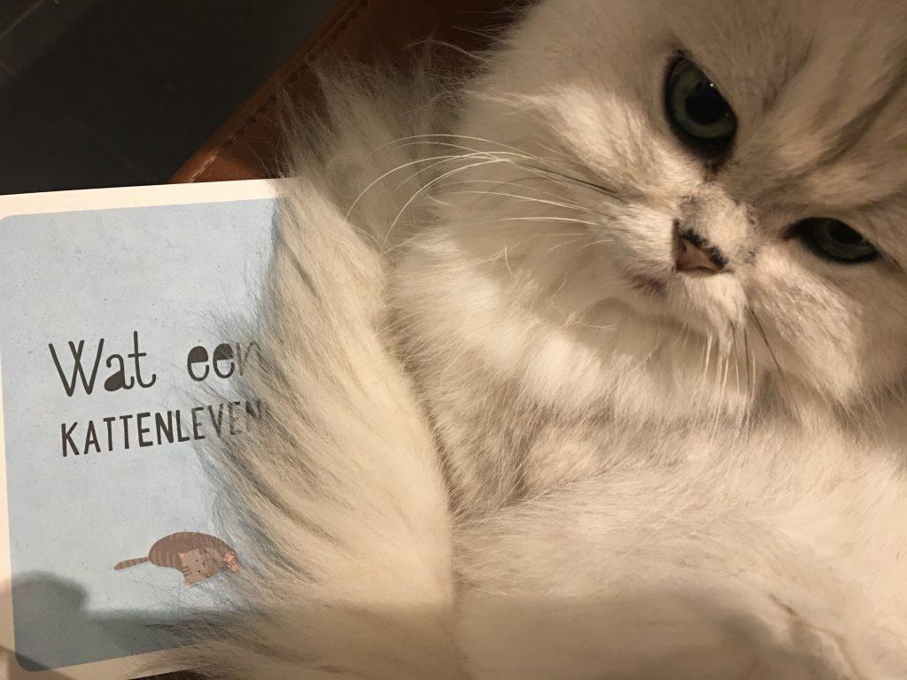 foto's, instagram kat