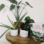 urban jungle, kamerplanten, boek