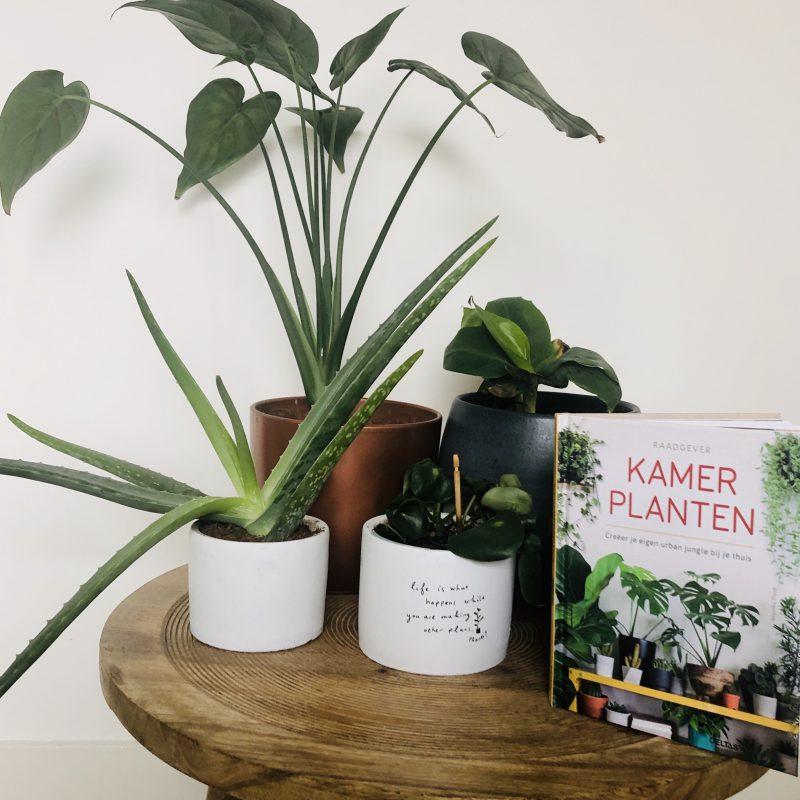 Tover je huis om tot urban jungle! We hebben 'kamerplanten' als raadgever ingeslagen.