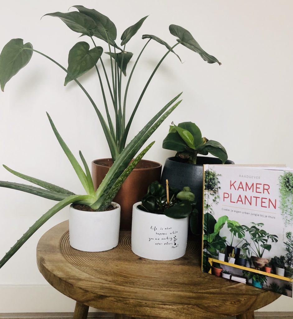 urban jungle, kamerplanten, boek