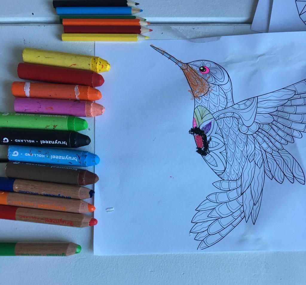 kleurplaten, tekenen, vogel, kleuren