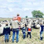 opa, kleinkinderen, schenken aan je kleinkind, schapen