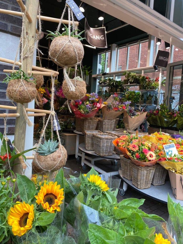 kokodama, planten, groen
