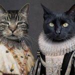 lavistique, poes, kat, huisdieren, portret