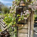 tuin, achtertuin, bloemen