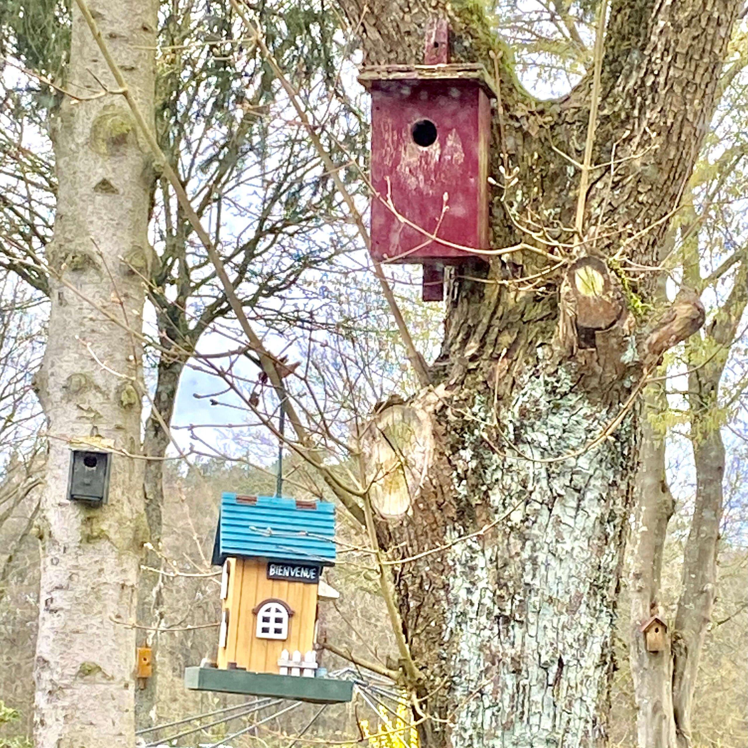 tuin ,vogels, gras, vogels lokken, tuin, vogelkenner